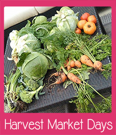 Harvest Market Days