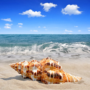 shelling-on-sanibel-island-fl